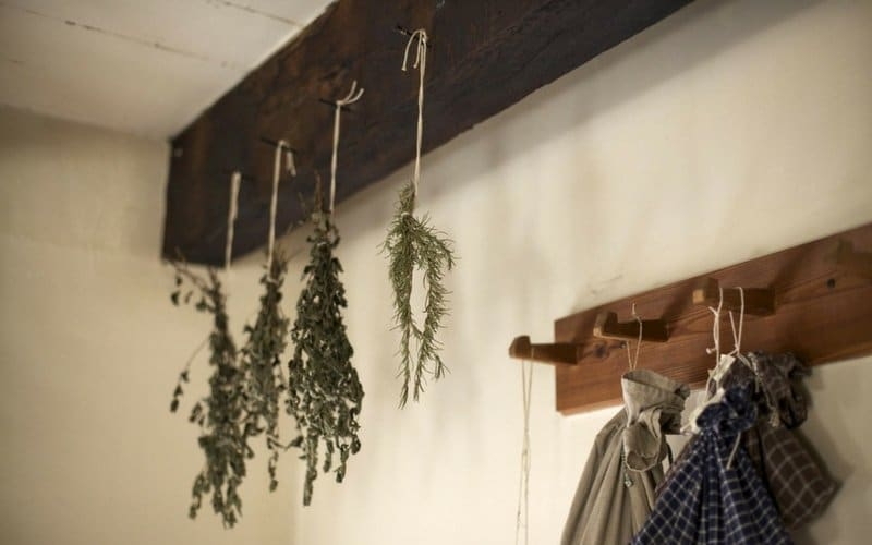 Herbs hanging from pegs on a bathroom wall